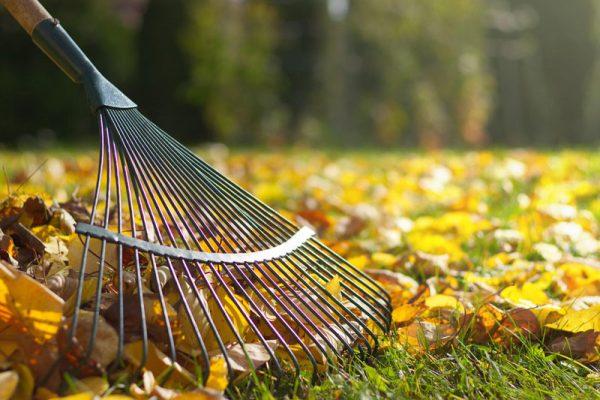 cuidado de tu jardín para el otoño
